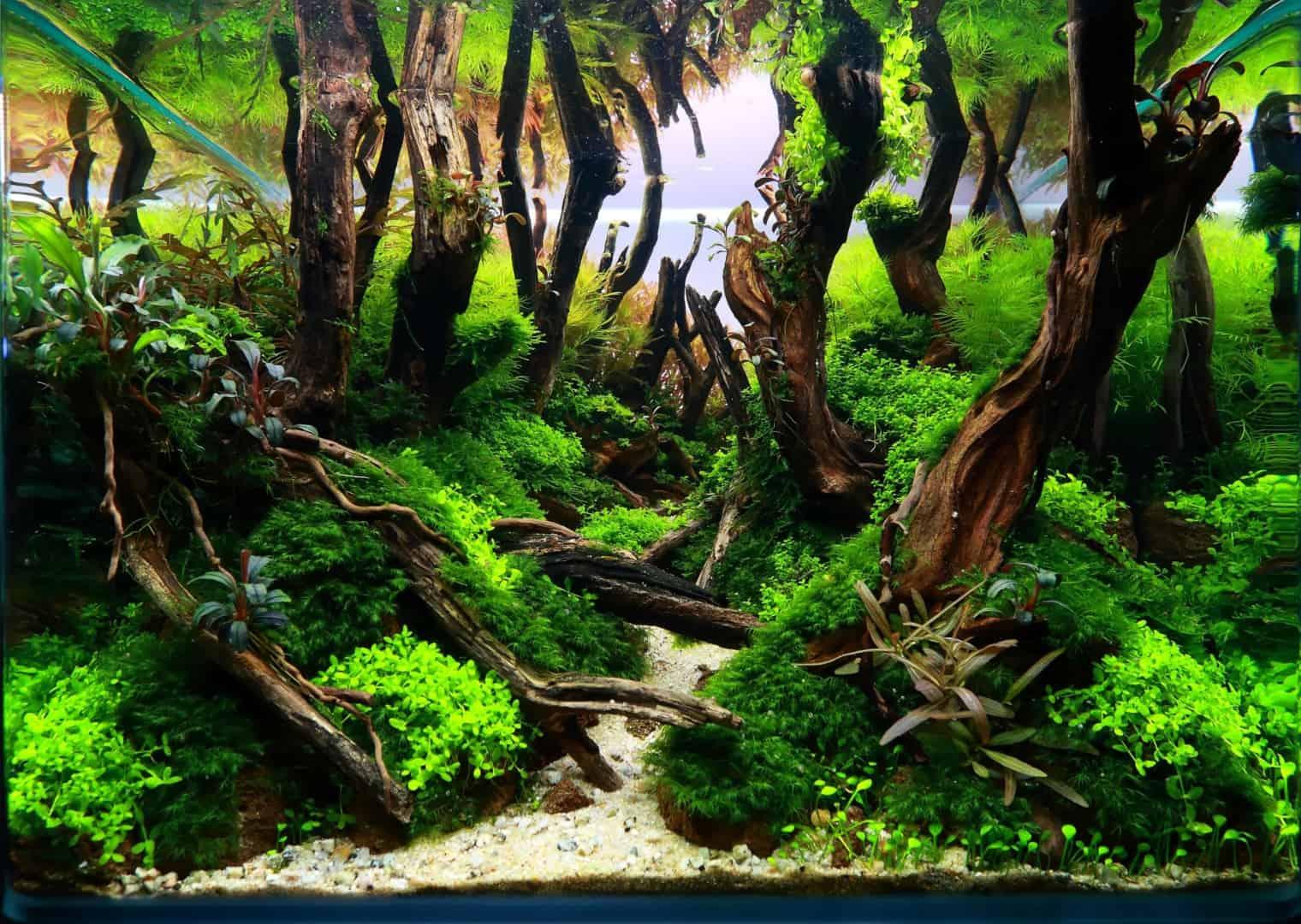 191 - The Art of the Planted Aquarium - Neuheiten und Möglichkeiten zum Mitmachen im April 2019 (Stefanie Hesse) 18