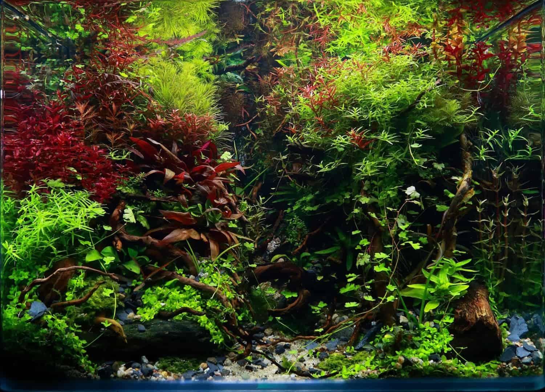 191 - The Art of the Planted Aquarium - Neuheiten und Möglichkeiten zum Mitmachen im April 2019 (Stefanie Hesse) 20