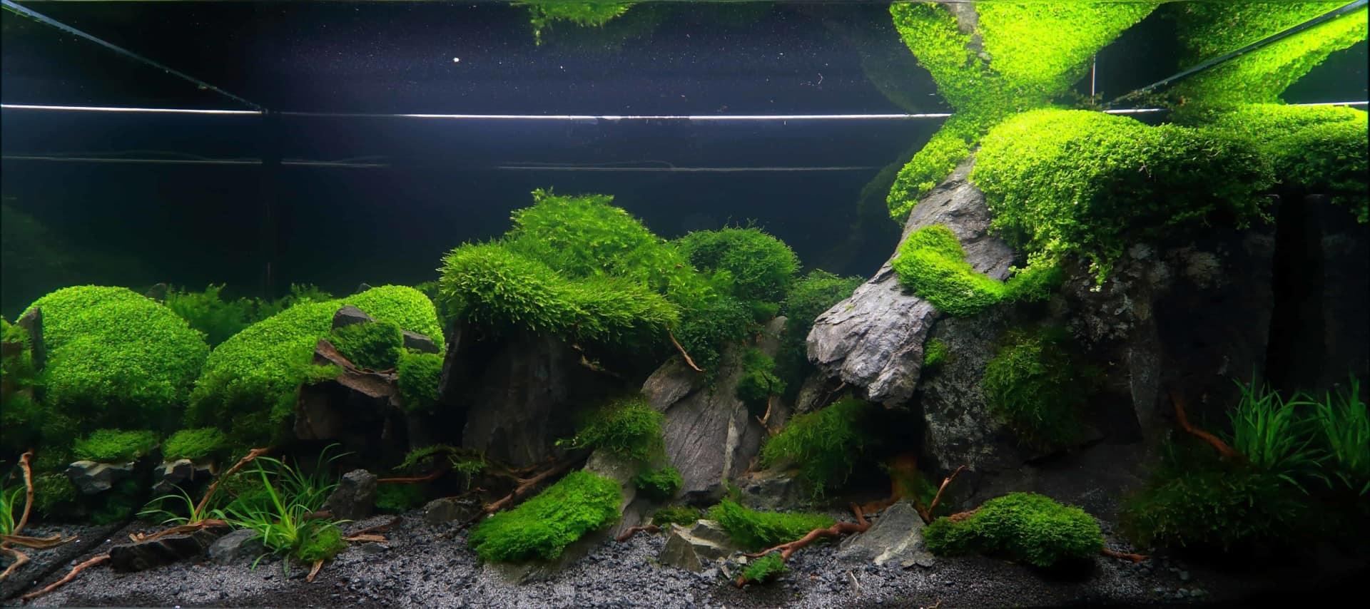 191 - The Art of the Planted Aquarium - Neuheiten und Möglichkeiten zum Mitmachen im April 2019 (Stefanie Hesse) 2