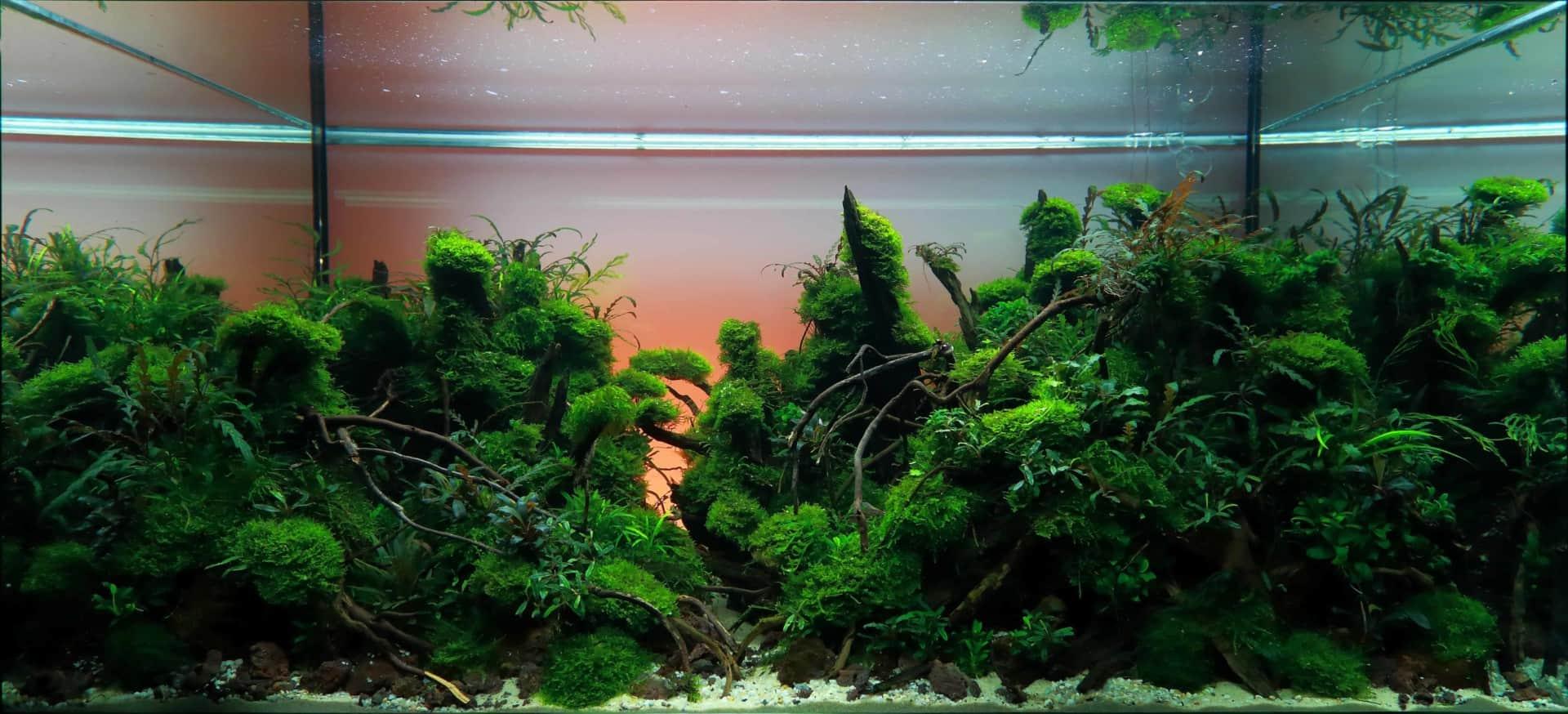 191 - The Art of the Planted Aquarium - Neuheiten und Möglichkeiten zum Mitmachen im April 2019 (Stefanie Hesse) 9