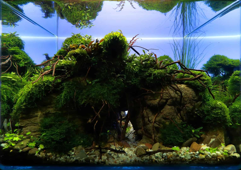 191 - The Art of the Planted Aquarium - Neuheiten und Möglichkeiten zum Mitmachen im April 2019 (Stefanie Hesse) 21