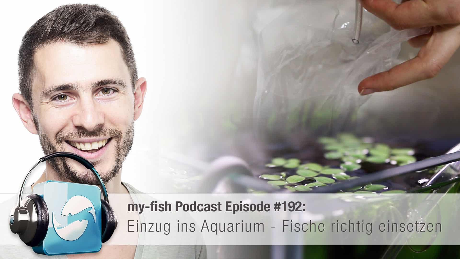 Podcast Episode #192: Einzug ins Aquarium - Fische richtig einsetzen 1