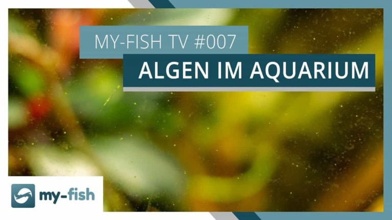 my-fish TV Episode 007