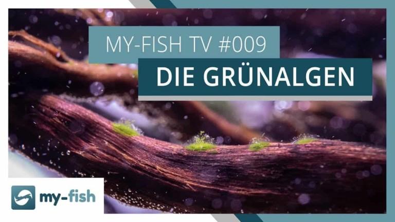 my-fish TV Episode 008