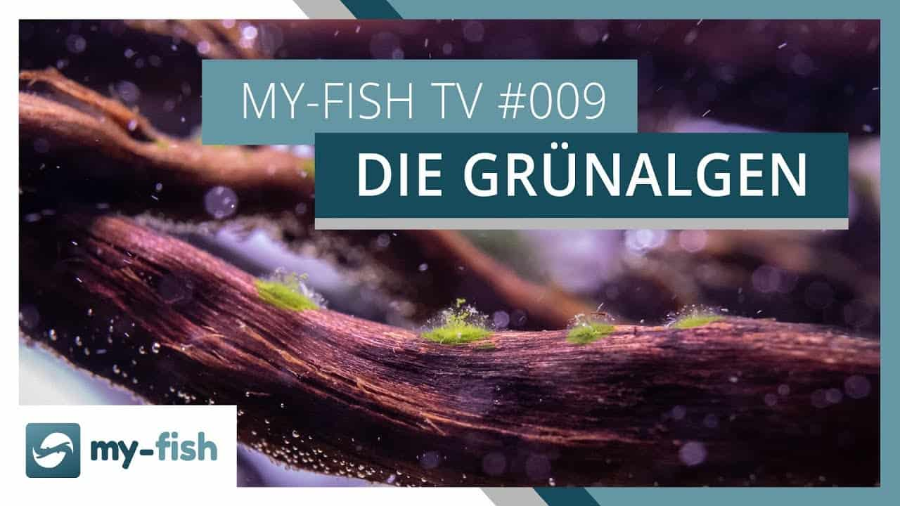 my-fish TV Episode 008