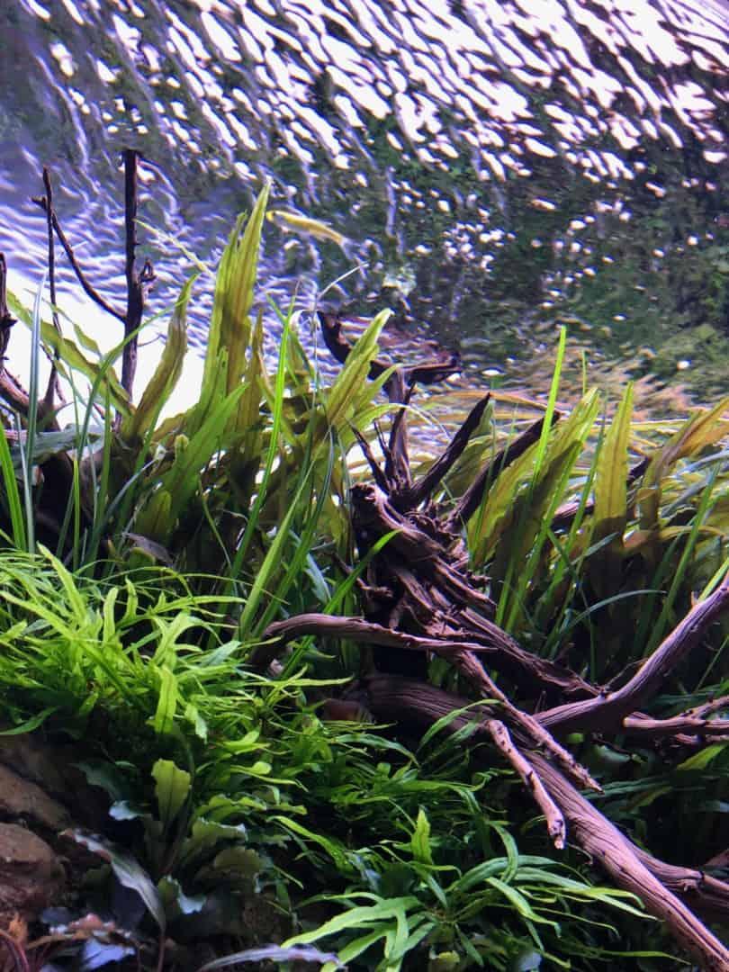 194: Algen während der Einfahrphase eines neuen Aquariums - Warum passiert es? Was kann man machen? 3