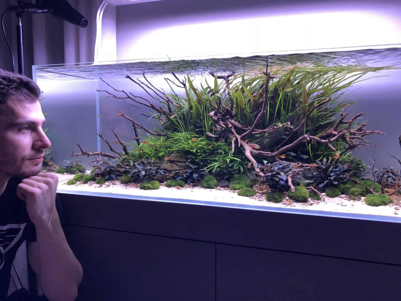 194: Algen während der Einfahrphase eines neuen Aquariums - Warum passiert es? Was kann man machen? 5