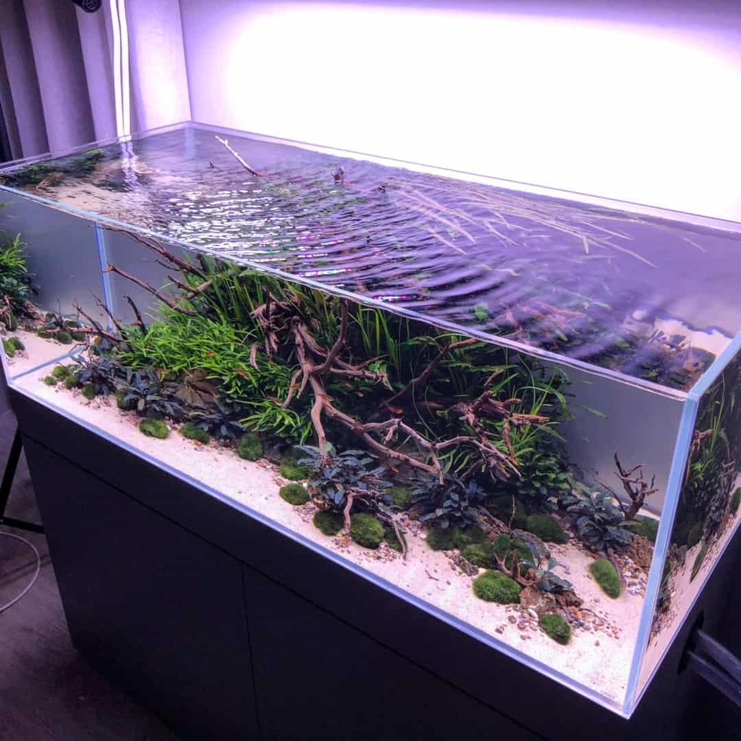 194: Algen während der Einfahrphase eines neuen Aquariums - Warum passiert es? Was kann man machen? 6