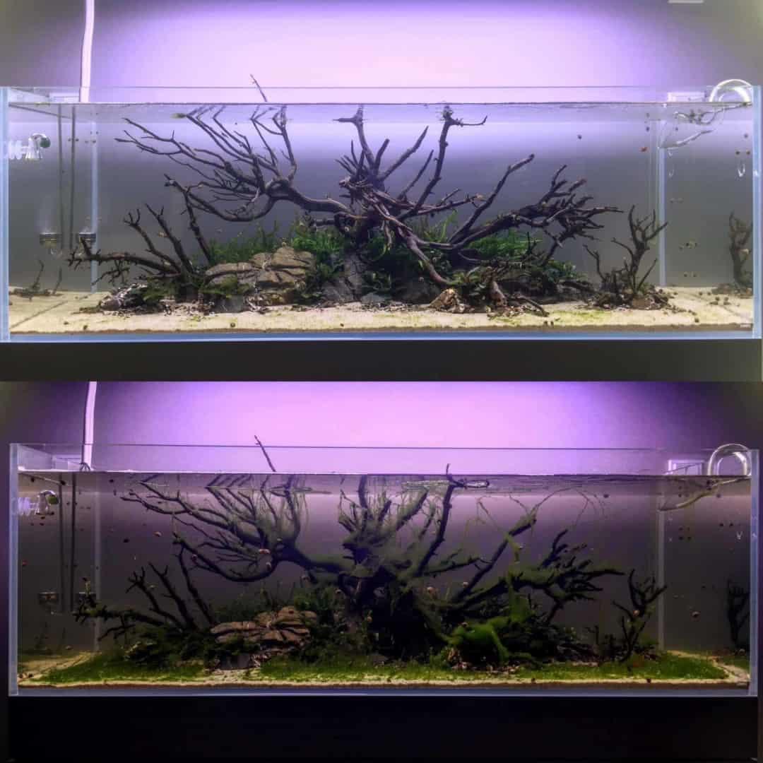 194: Algen während der Einfahrphase eines neuen Aquariums - Warum passiert es? Was kann man machen? 10