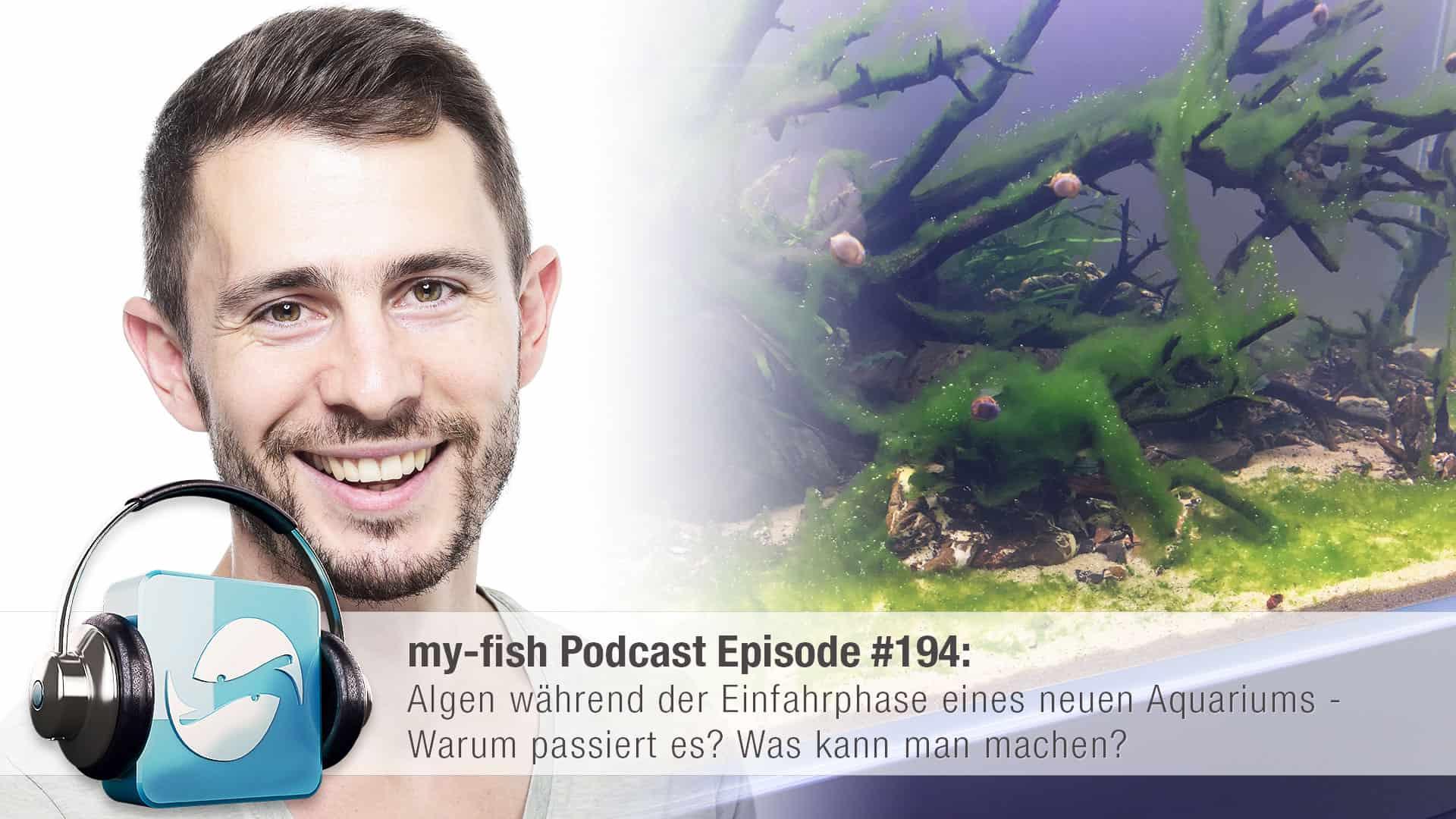 194: Algen während der Einfahrphase eines neuen Aquariums - Warum passiert es? Was kann man machen? 1