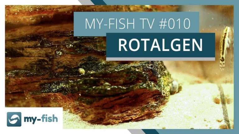my-fish TV Episode 010