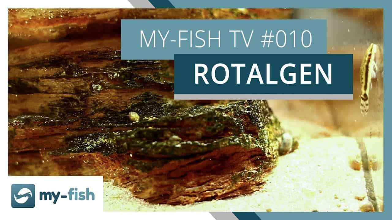 my-fish TV Episode 010