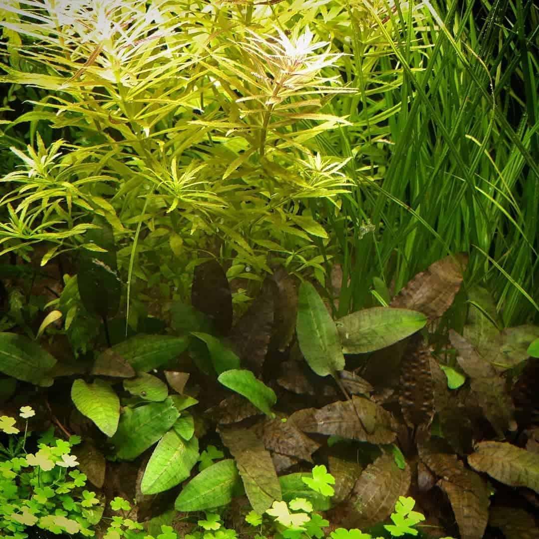 196 - Der Wiedereinstieg in die Aquaristik - So findest du Motivation und Hilfe (Detlef Welzel) 4