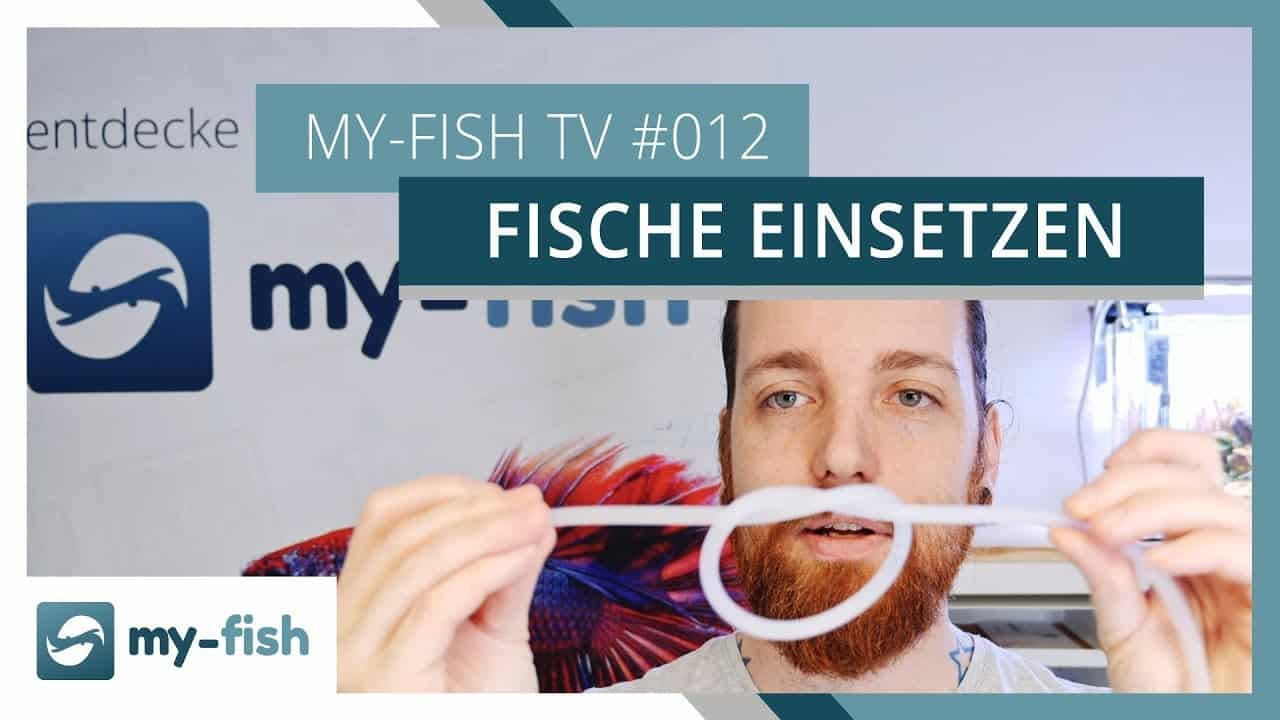 my-fish TV Episode 012