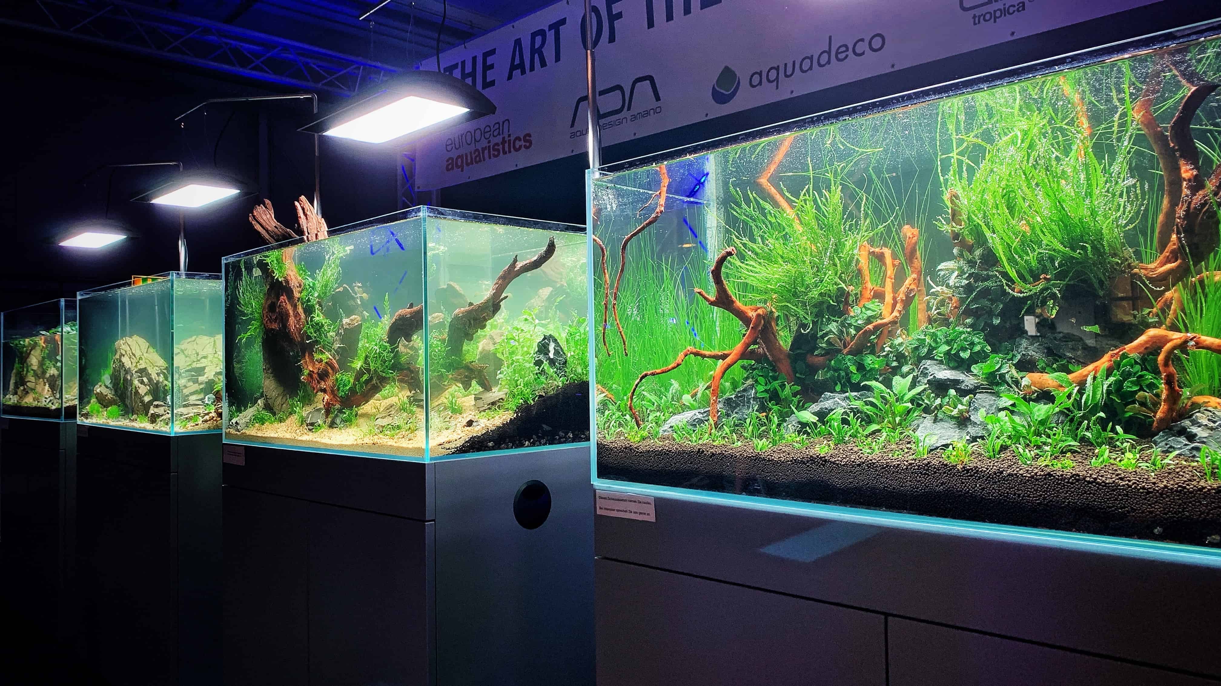 199 - Tierwelt Magdeburg 2019 - TAOTPA, EAPLC & Aquarium Design Meisterschule (Tobias Gawrisch) 6