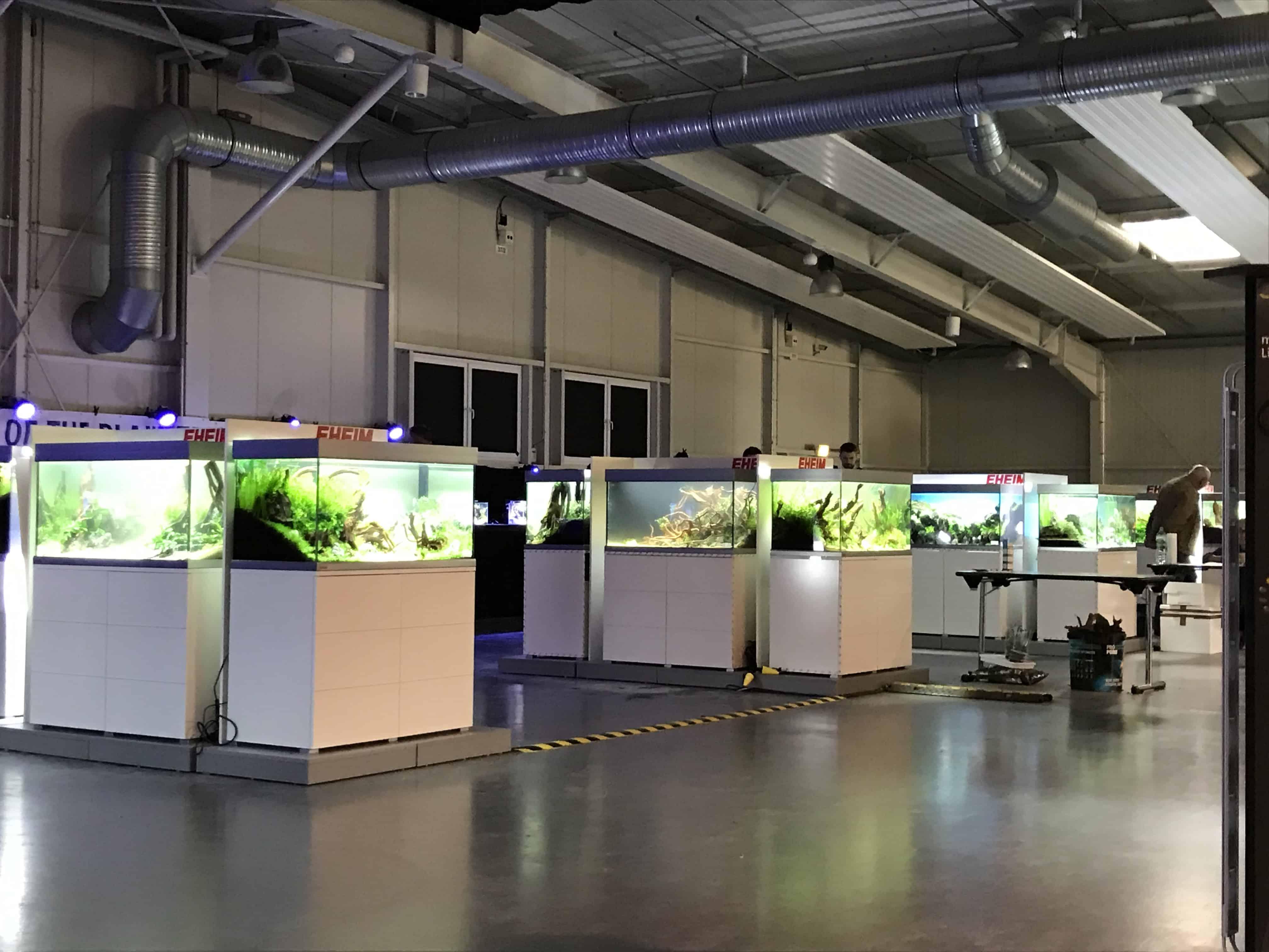 199 - Tierwelt Magdeburg 2019 - TAOTPA, EAPLC & Aquarium Design Meisterschule (Tobias Gawrisch) 8