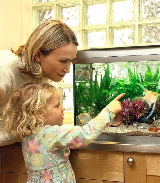 Aquarien in der Wohnung: Was Mieter beachten müssen 1