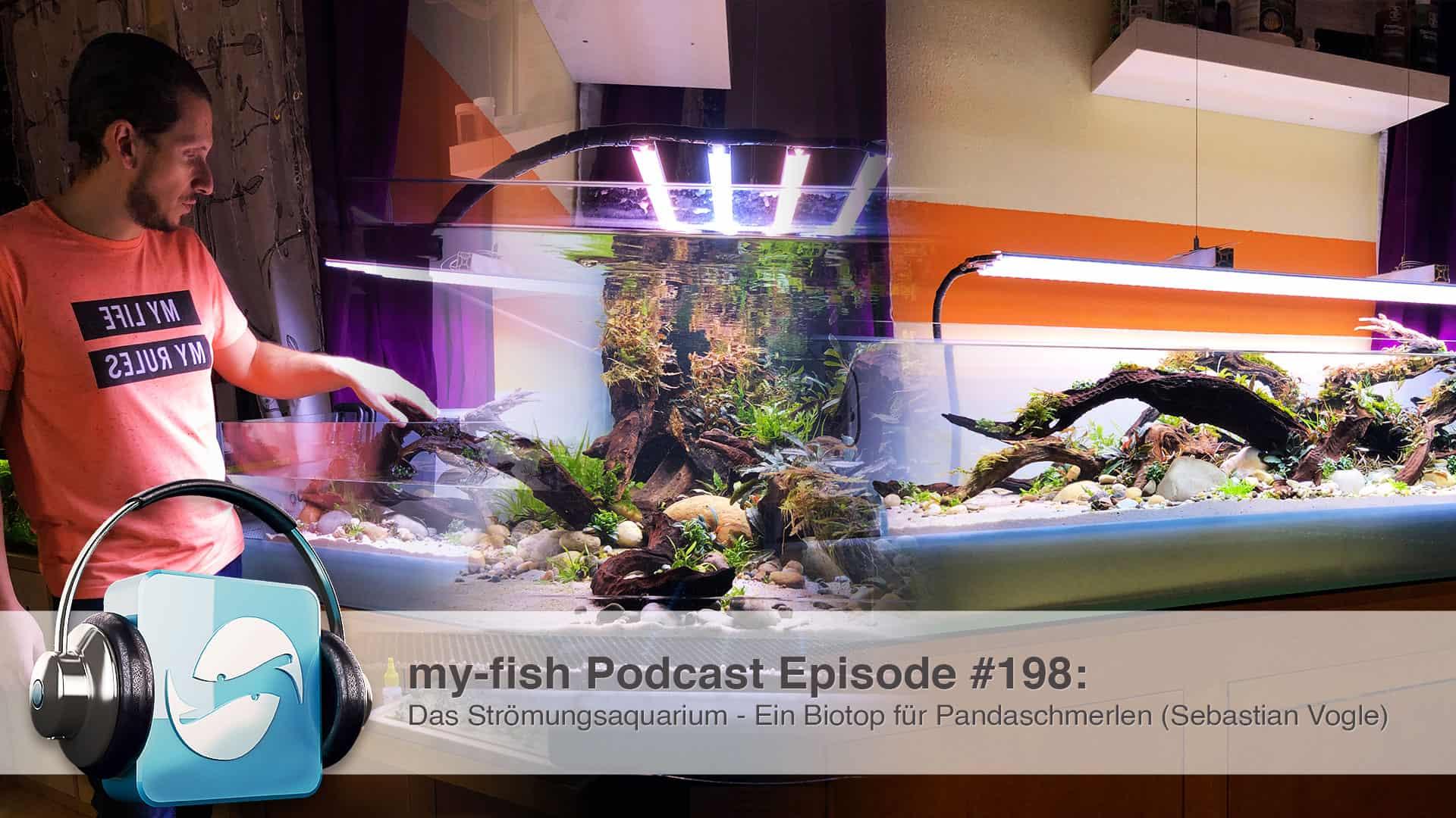Podcast Episode #198: Das Strömungsaquarium - Ein Biotop für Pandaschmerlen (Sebastian Vogel) 1