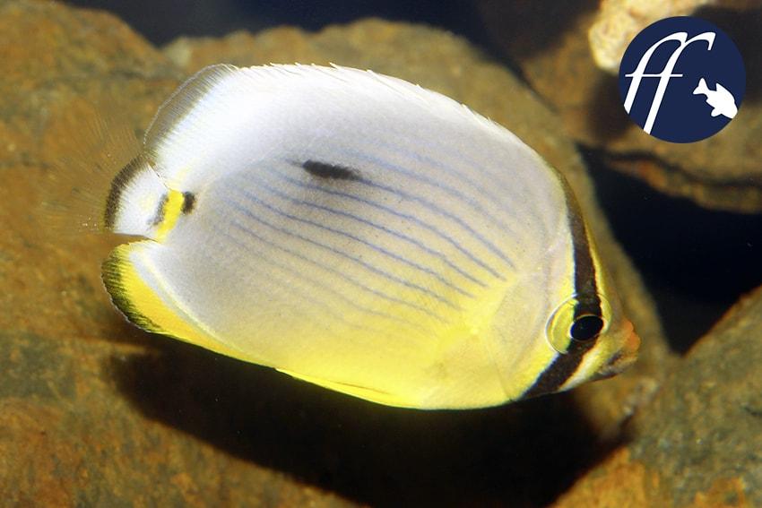 Franky Friday: Die Symbiose von Aquarienfisch und Aquarianern 1