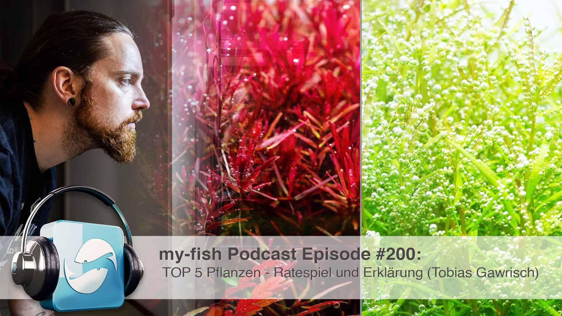 Podcast Episode #200: TOP 5 Pflanzen – Ratespiel und Erklärung 1