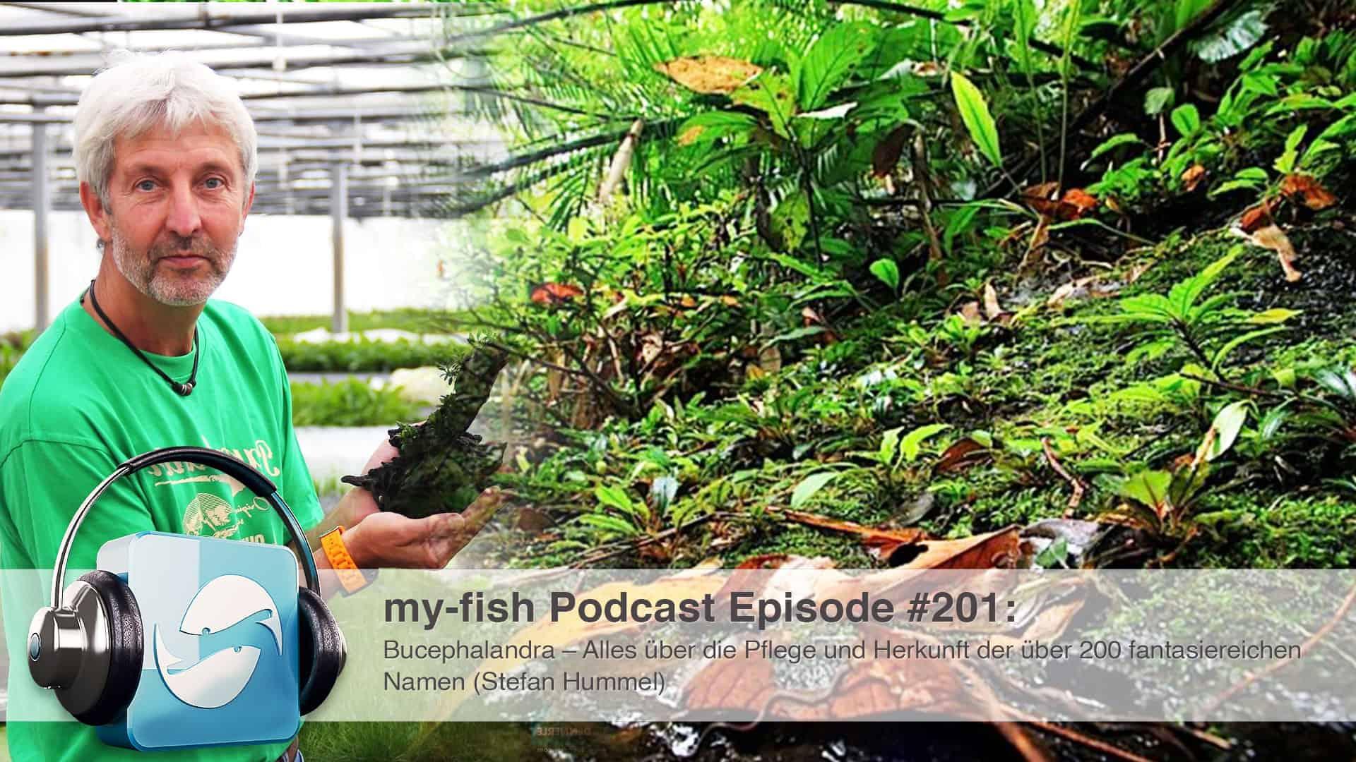 Podcast Episode #201: Bucephalandra – Alles über die Pflege und Herkunft der über 200 fantasiereichen Namen (Stefan Hummel) 1