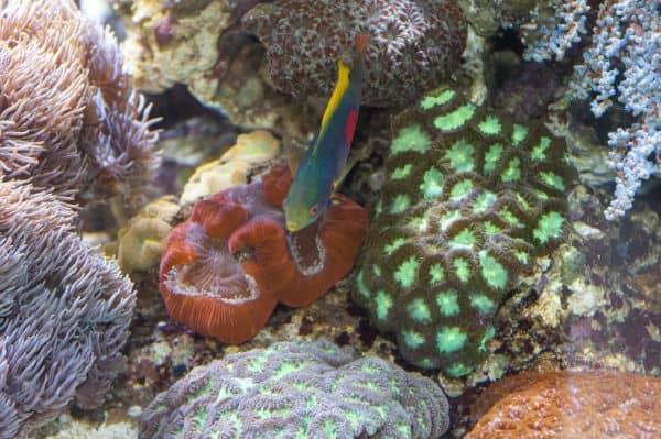 Die farbenprächtigen Korallen - Sie brauchen Licht, um nicht zu verhungern 2