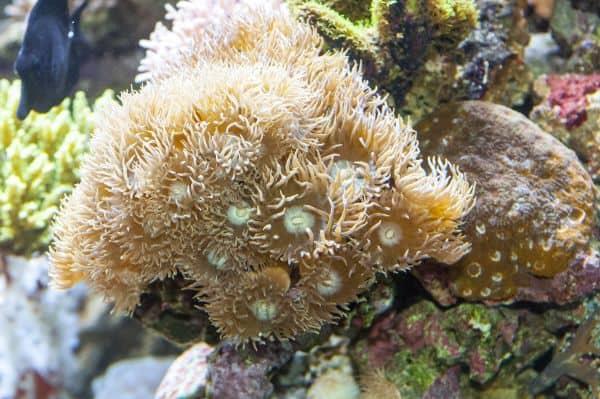 Die farbenprächtigen Korallen - Sie brauchen Licht, um nicht zu verhungern 3