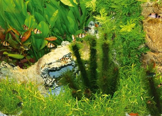 203 Welcher Aquarientyp bist du? Vorstellung unterschiedlicher Arten von Aquarien und deren Besonderheiten 2