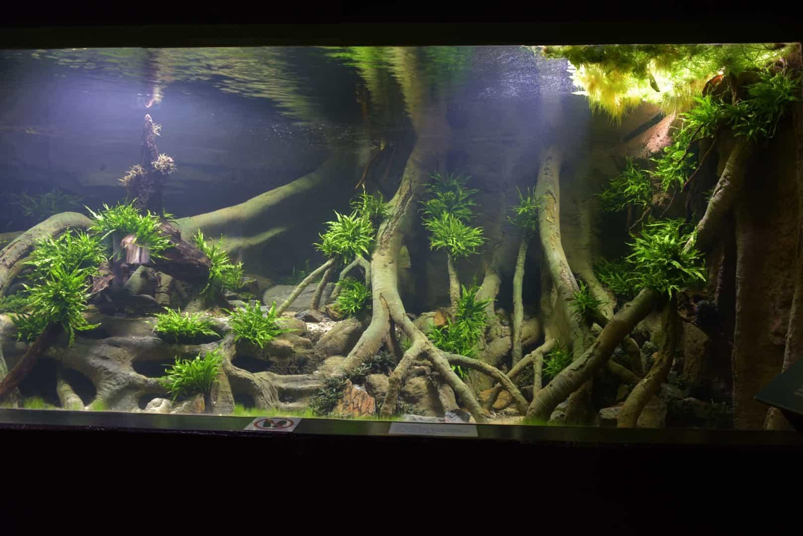205 - Das 28.000 Liter Sumatra Flusslauf Aquarium im Tierpark Hagenbeck - Die Planung und Vorbereitung + Fakten (Stefan Hummel) 11