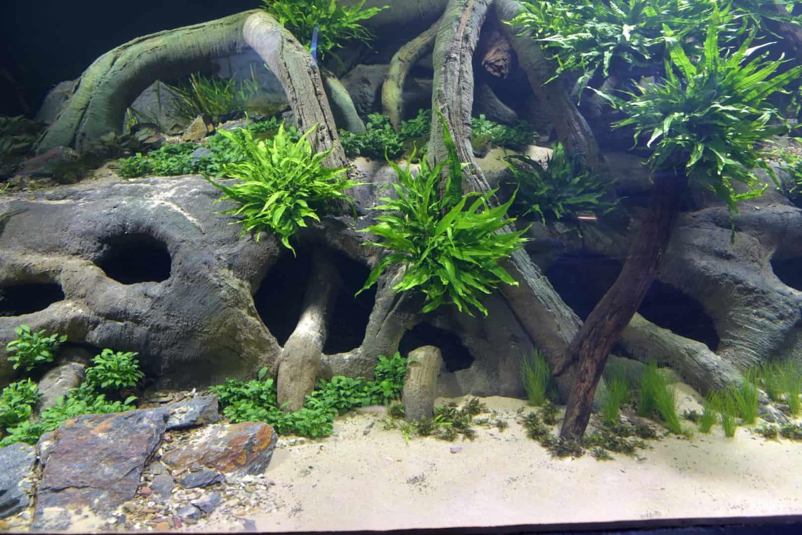 205 - Das 28.000 Liter Sumatra Flusslauf Aquarium im Tierpark Hagenbeck - Die Planung und Vorbereitung + Fakten (Stefan Hummel) 12