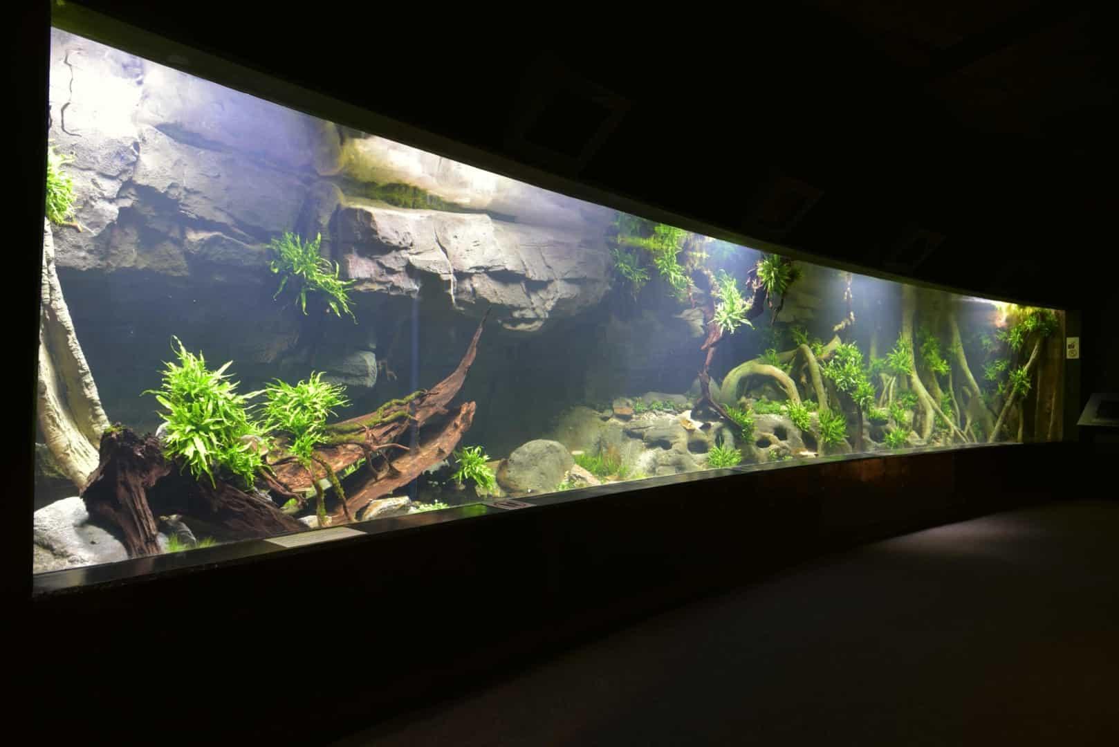 205 - Das 28.000 Liter Sumatra Flusslauf Aquarium im Tierpark Hagenbeck - Die Planung und Vorbereitung + Fakten (Stefan Hummel) 13