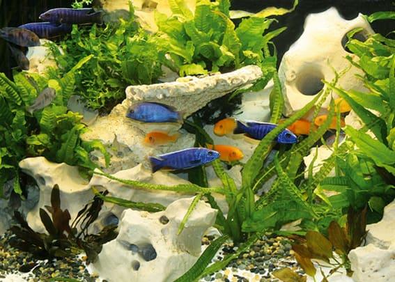203 Welcher Aquarientyp bist du? Vorstellung unterschiedlicher Arten von Aquarien und deren Besonderheiten 3
