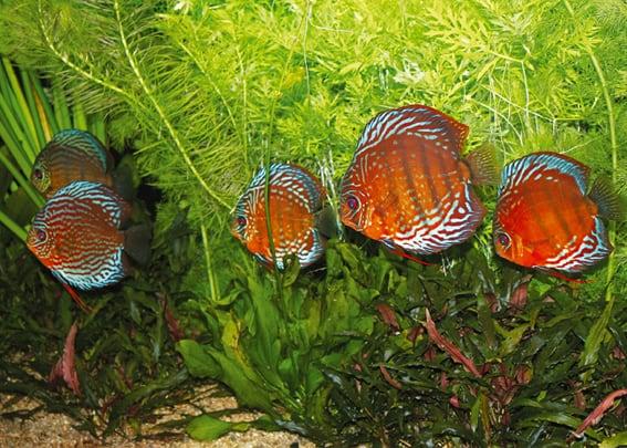 203 Welcher Aquarientyp bist du? Vorstellung unterschiedlicher Arten von Aquarien und deren Besonderheiten 4