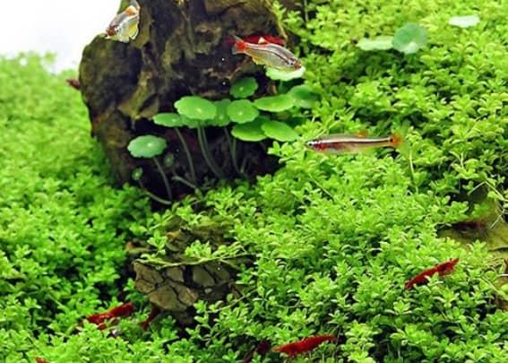 203 Welcher Aquarientyp bist du? Vorstellung unterschiedlicher Arten von Aquarien und deren Besonderheiten 5