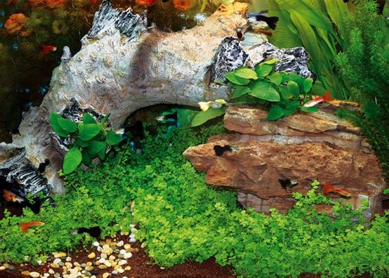 203 Welcher Aquarientyp bist du? Vorstellung unterschiedlicher Arten von Aquarien und deren Besonderheiten 6
