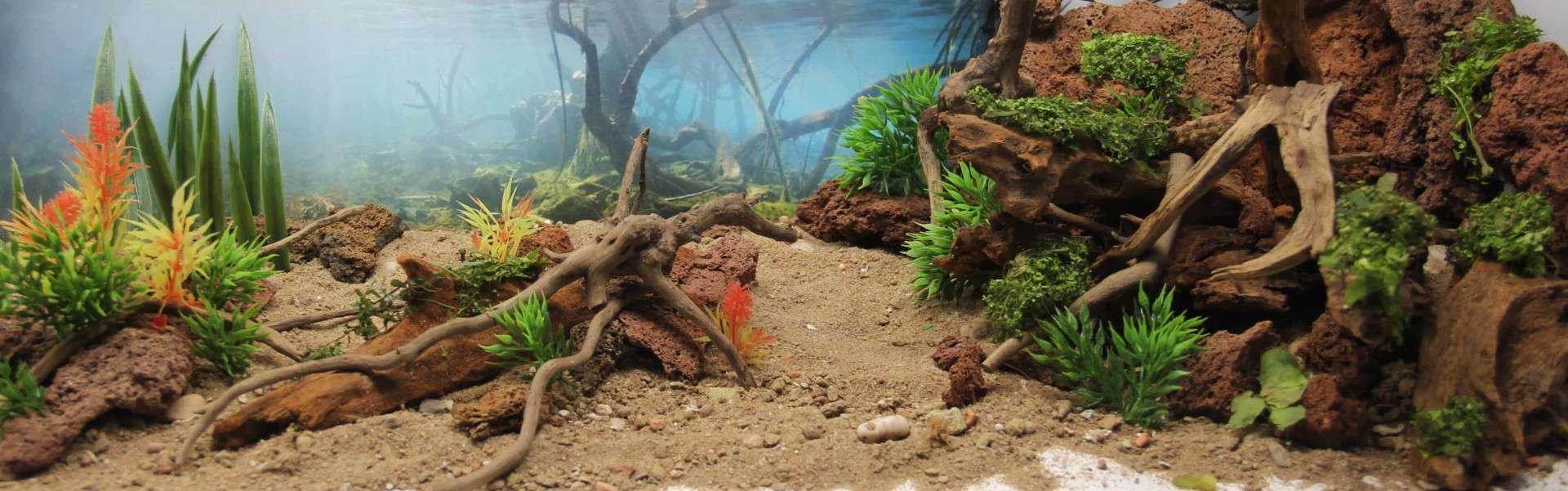 205 - Das 28.000 Liter Sumatra Flusslauf Aquarium im Tierpark Hagenbeck - Die Planung und Vorbereitung + Fakten (Stefan Hummel) 21