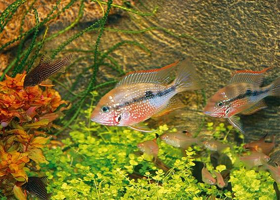 203 Welcher Aquarientyp bist du? Vorstellung unterschiedlicher Arten von Aquarien und deren Besonderheiten 7