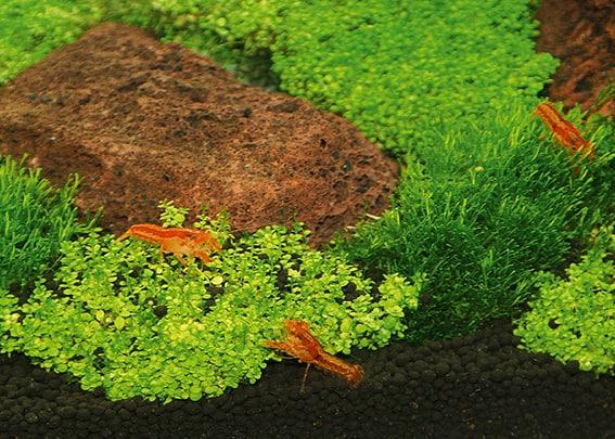 203 Welcher Aquarientyp bist du? Vorstellung unterschiedlicher Arten von Aquarien und deren Besonderheiten 9