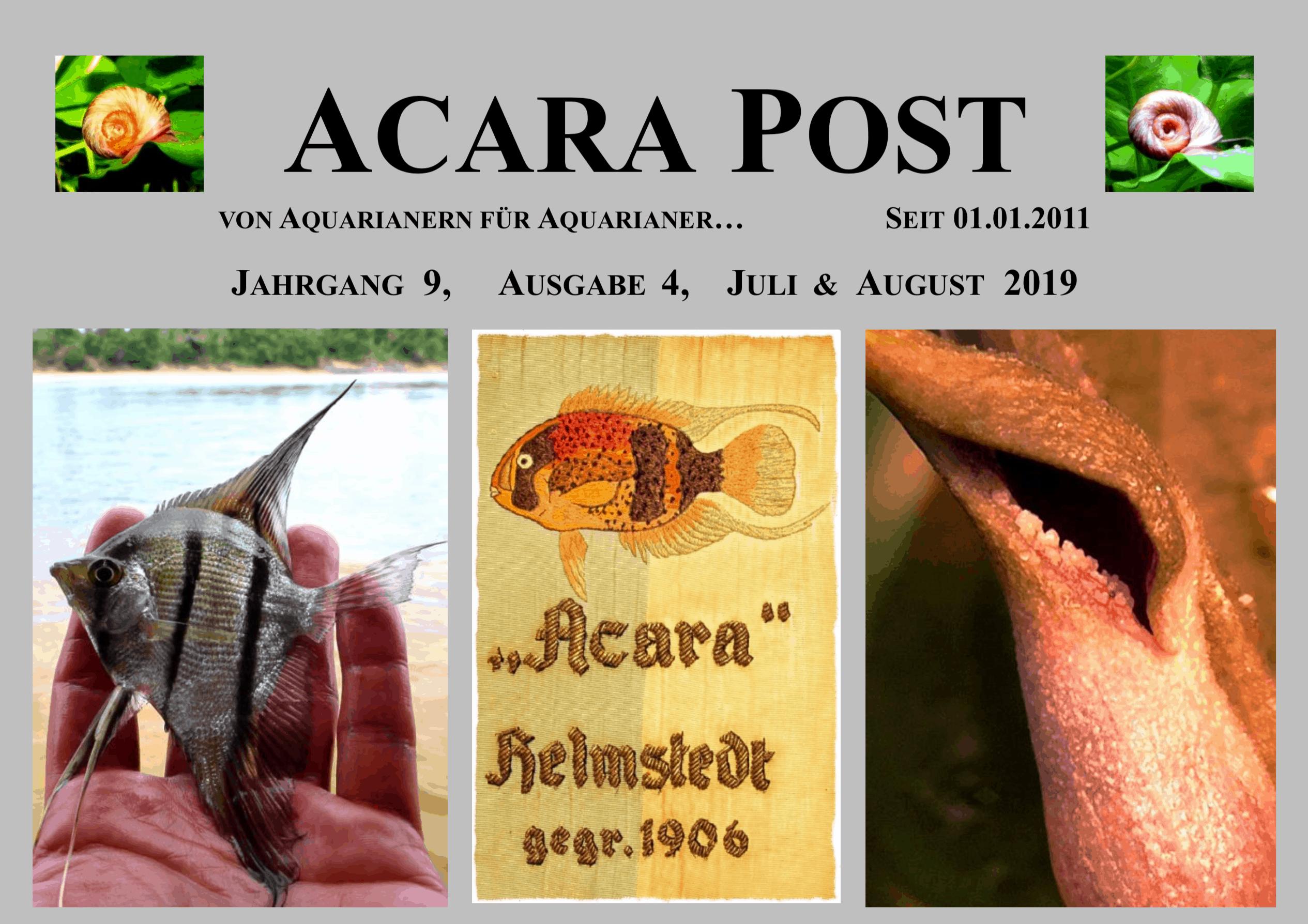 Acara-Post Juli & August 2019 - jetzt kostenlos lesen 1