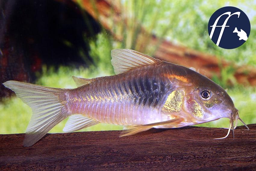 Franky Friday: Was macht einen Fisch eigentlich zur Seltenheit? 1