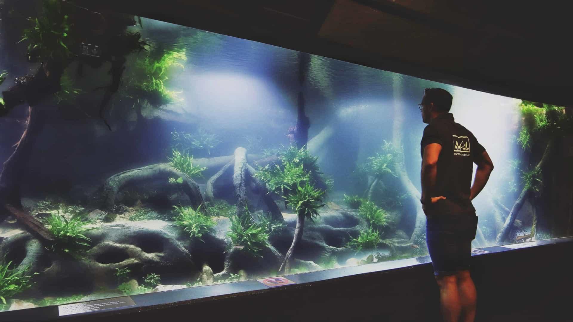 206 - Das 28.000 Liter Sumatra Flusslauf Aquarium im Tierpark Hagenbeck - Die Umsetzung und Einrichtung (Volker Jochum) 2