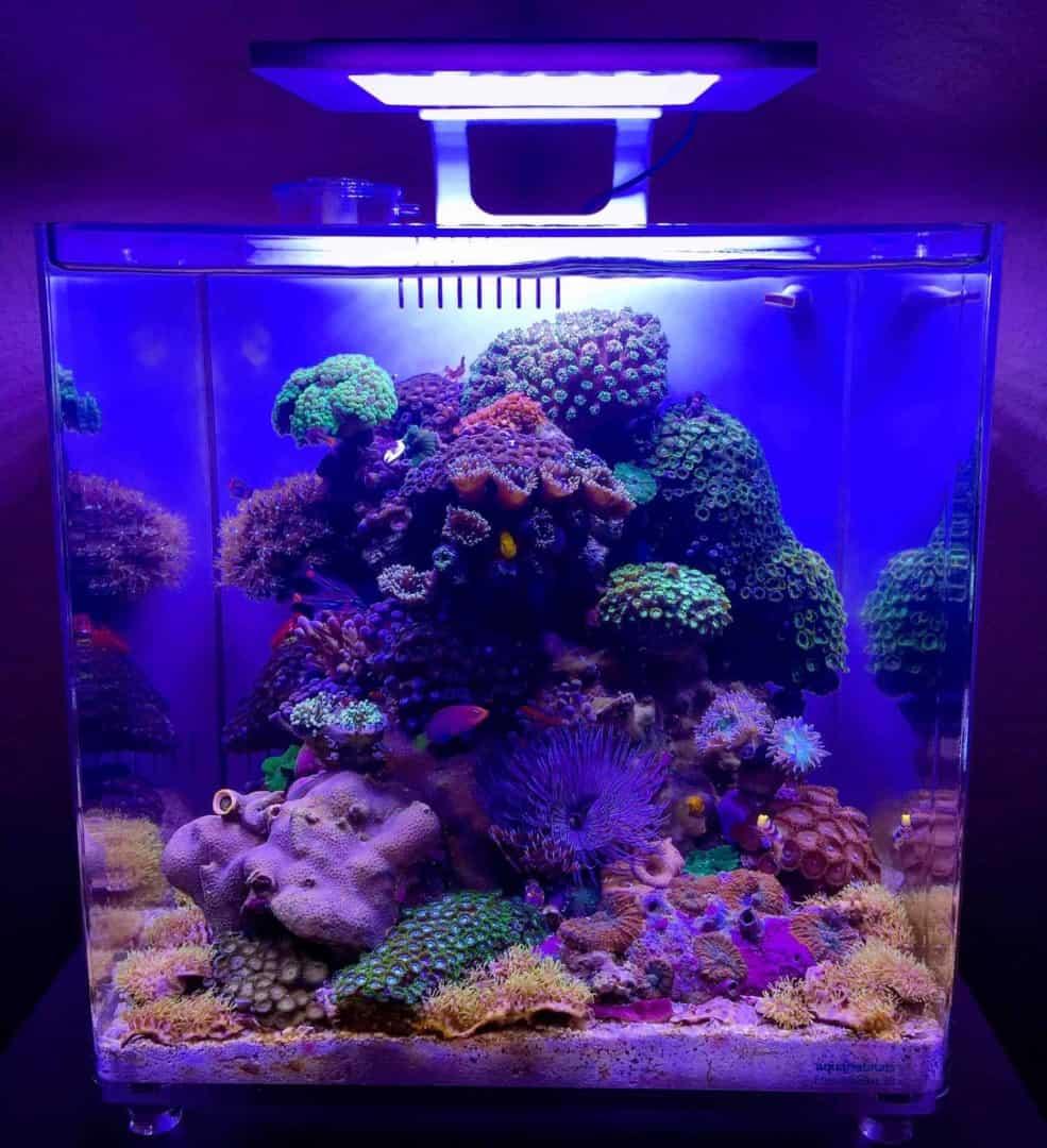 210: Das Nano Meerwasseraquarium - Möglichkeiten, Grenzen und Tipps zur Pflege (Adrie Baumann) 2