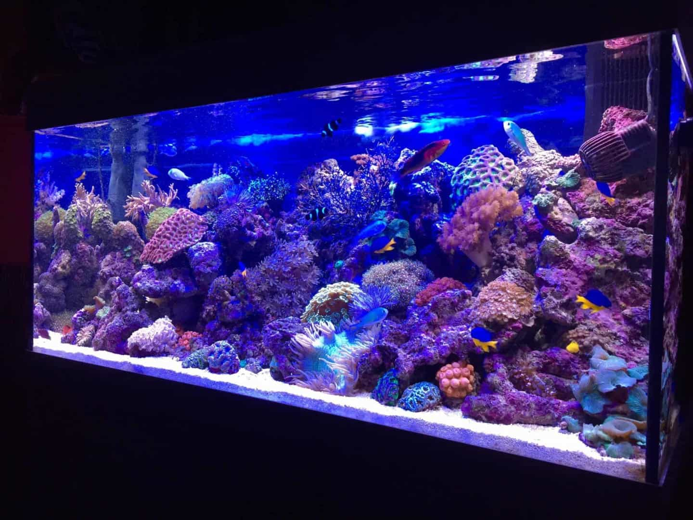 210: Das Nano Meerwasseraquarium - Möglichkeiten, Grenzen und Tipps zur Pflege (Adrie Baumann) 3