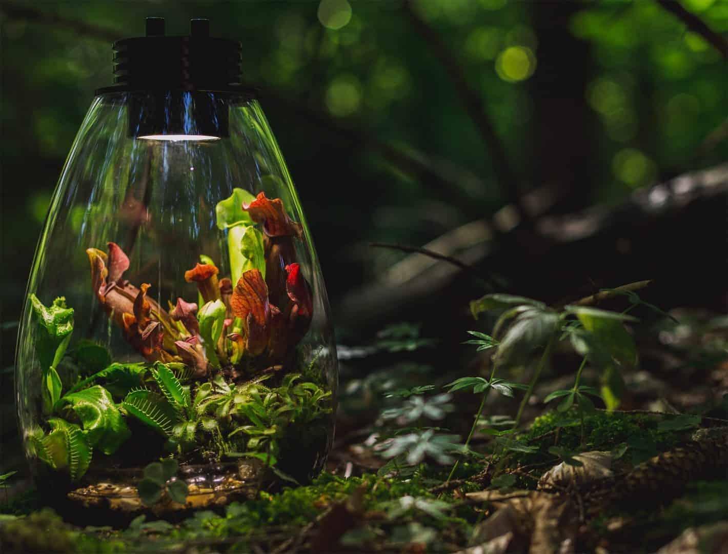 207 - Baiosphere - Das Planzenterrarium: Mikrokosmos selbst für schwierige Pflanzen (Benedigt Vimalavong) 2