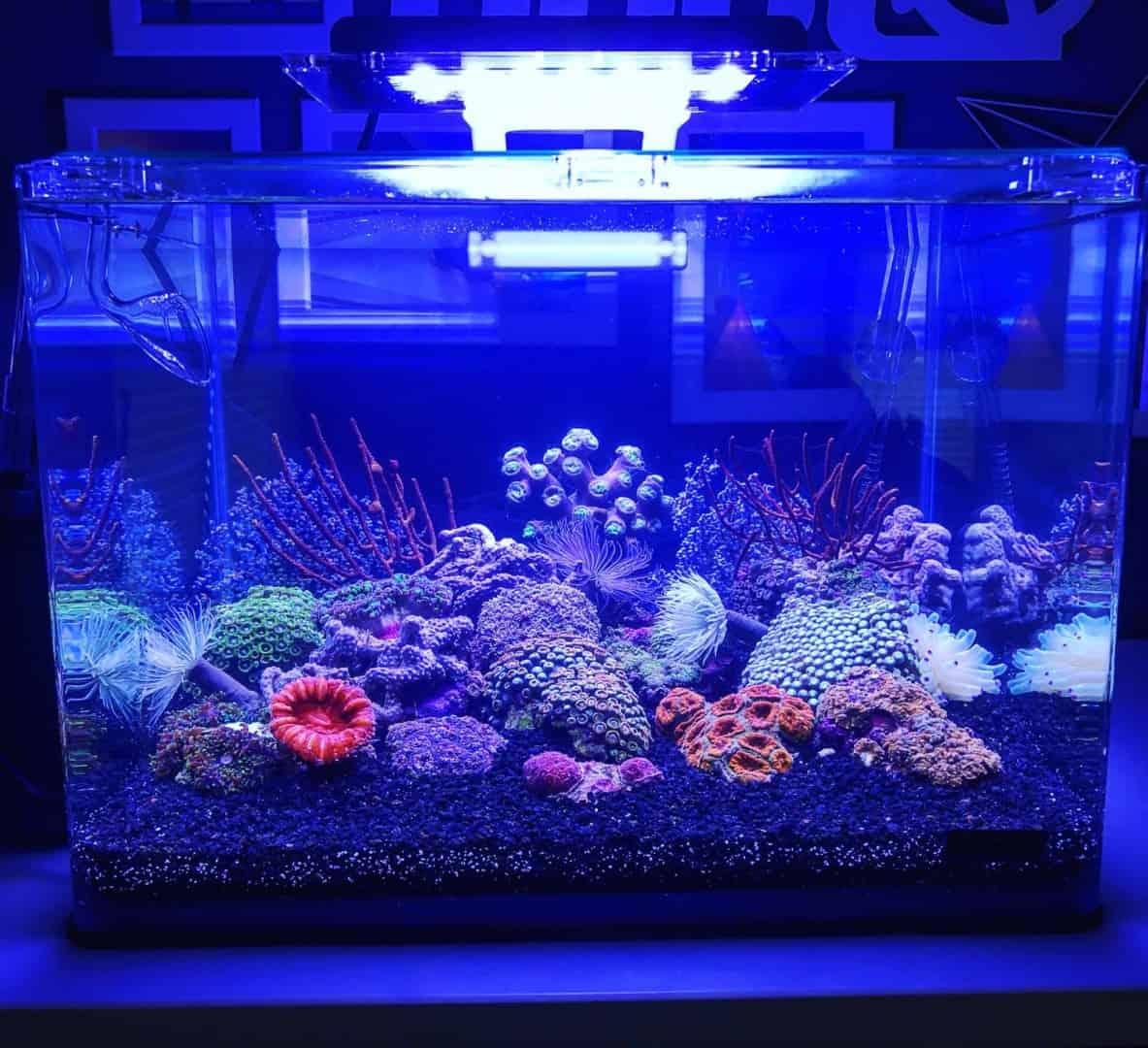 210: Das Nano Meerwasseraquarium - Möglichkeiten, Grenzen und Tipps zur Pflege (Adrie Baumann) 4