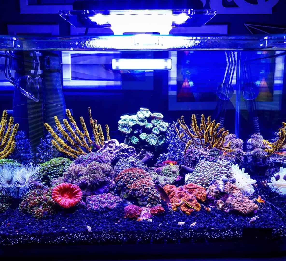 210: Das Nano Meerwasseraquarium - Möglichkeiten, Grenzen und Tipps zur Pflege (Adrie Baumann) 5