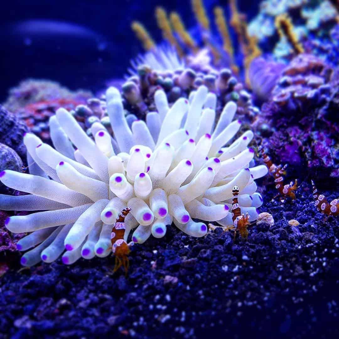 210: Das Nano Meerwasseraquarium - Möglichkeiten, Grenzen und Tipps zur Pflege (Adrie Baumann) 6
