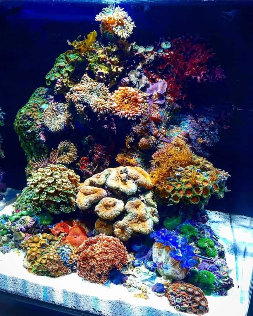 210: Das Nano Meerwasseraquarium - Möglichkeiten, Grenzen und Tipps zur Pflege (Adrie Baumann) 7