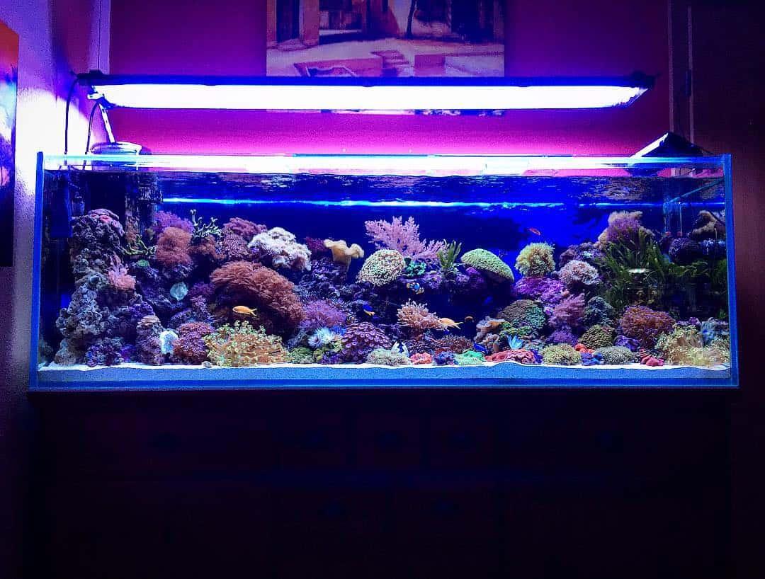 210: Das Nano Meerwasseraquarium - Möglichkeiten, Grenzen und Tipps zur Pflege (Adrie Baumann) 8