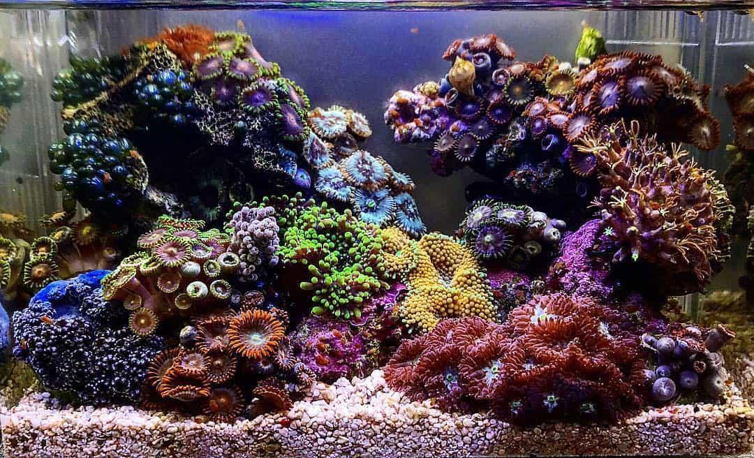 210: Das Nano Meerwasseraquarium - Möglichkeiten, Grenzen und Tipps zur Pflege (Adrie Baumann) 9